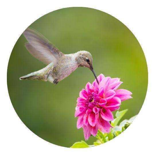 Hummingbird Google algorithm update 2013
