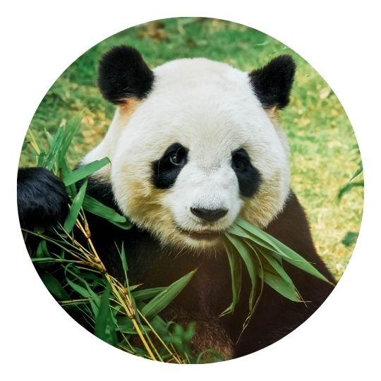 Panda Google algorithm update 2011