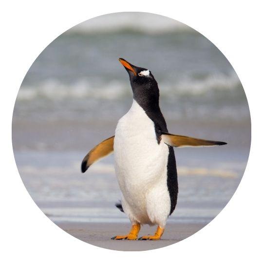 Penguin Google algorithm update 2012